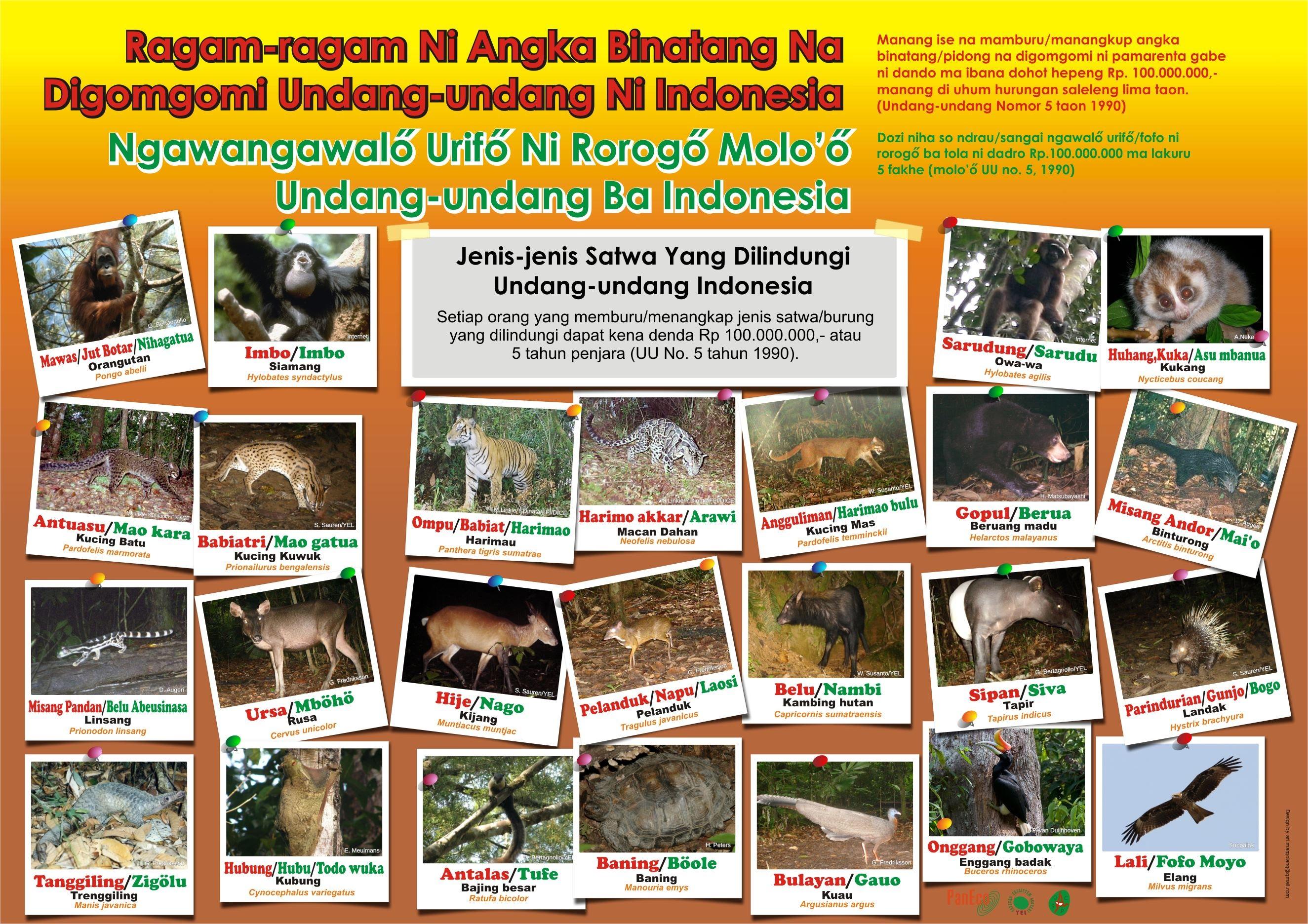 www.batangtoru.org